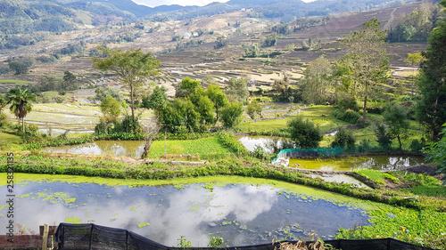Foto auf Gartenposter Reisfelder Yunnan terraced rice fields, China. Yuanyang Terraced Rice Fields. View of the famous terraced rice fields of Yuanyang in Yunnan province in China