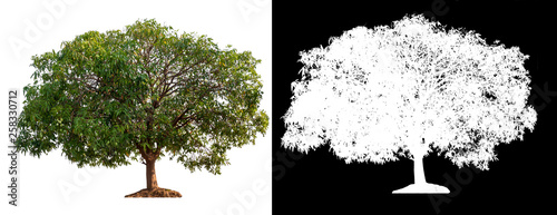 Foto  isolated tree on white background