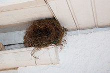 Nest Bird Under The Roof Home