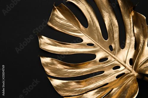 Złoty monstera liść na czarnym tle