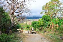 A Man Guides His Cart And Donkeys Down A Dirt Road On The Tropical Island Of Ometepe, Nicaragua.
