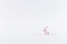 Little White Toy Bunny On White