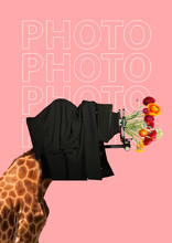 An Oldschool Photographer. A Giraffe's Head As A Man Taking Photo By Old Vintage Camera And Lens With Red And Yellow Flowers Against Pink Background. Modern Design. Contemporary Art Collage.