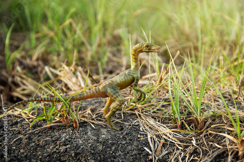 Fotografie, Obraz  Compsognathus or Compy is dinosaur theropod carnivorous in genus of smallest in the world on the ground in the jungle