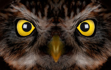 Portrait Of An Owl With Yellow