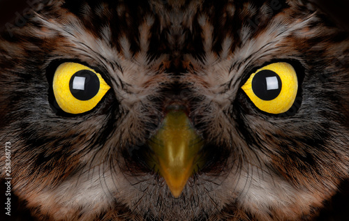 Foto op Canvas Hand getrokken schets van dieren portrait of an owl with yellow