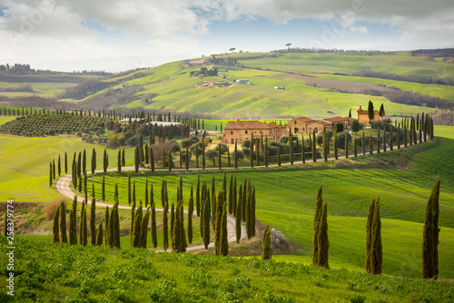 Tuscan hill with row of cypress trees and farmhouses Canvas