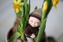 Hello Spring With Little Cute Elf And Real Yellow Daffodils Flowers.