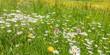 Panorama einer Frühlingsblumenwiese