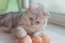 Cat With Easter Eggs.