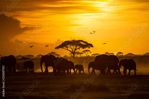 Herd of African Elephants at Golden Sunset Canvas Print