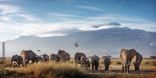Large Herd of African Elephants in Front of Kilimanjaro Poster Mural XXL