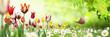 Leinwandbild Motiv Blumen 1031