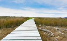 Long Wooden Walkway Through Wetland Nature In Wairau Lagoons