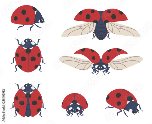 Insect ladybug Wallpaper Mural