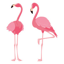 Elegant Flamingo Birds Couple