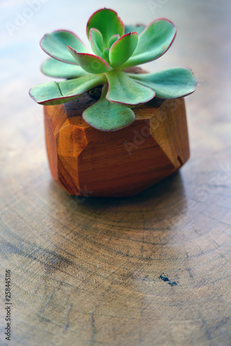 Fotografie, Obraz  A wooden pot planted with a green succulent plant