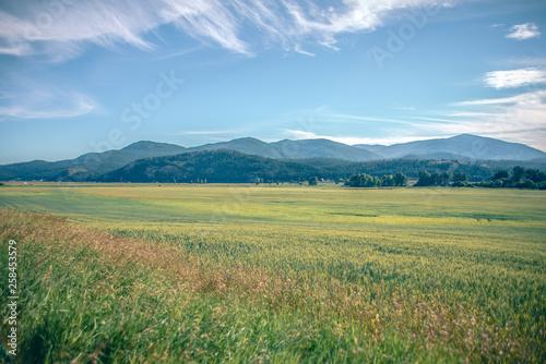 Fototapeta wide open vast montana landscape in summer