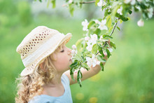 Girl Sniffing Flowers Of Apple...