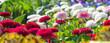 canvas print picture - Meer aus Blumen - Banner