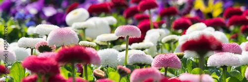 Photo  Meer aus Blumen - Banner