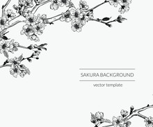 Hand Drawn Vintage Sakura Branches Background. Botanical Graphic Sketch Illustration Template.