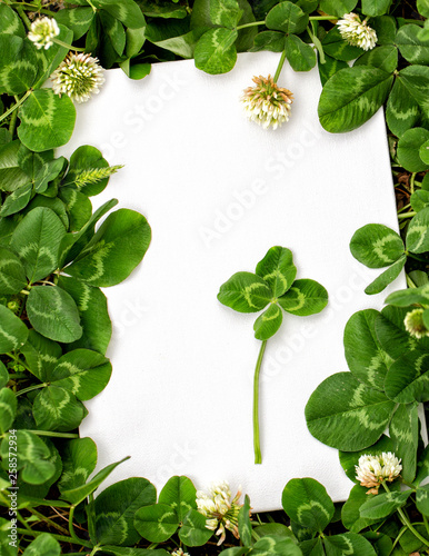 Blank Sign With Natural Fresh Shamrocks Border And Four Leaf