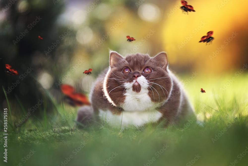 Fototapeta Kitten - Katze beobachtet Marienkäfer