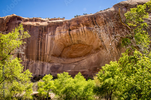 Sandstone Vertical Rock Striations Canvas Print