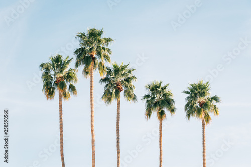Photographie Palm trees in Palm Springs, California
