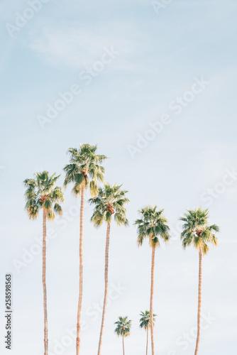 Autocollant pour porte Palmier Palm trees in Palm Springs, California