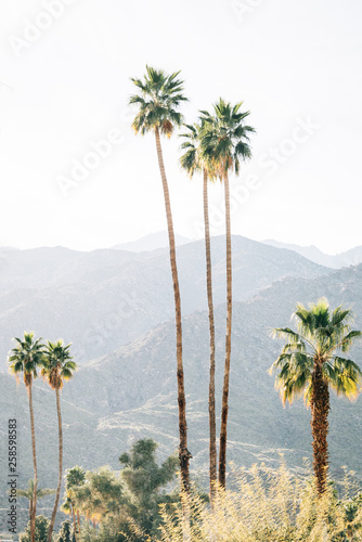 Palm trees and mountains in Palm Springs, California Wall mural