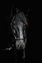 Portrait Of A Beautiful Black ...
