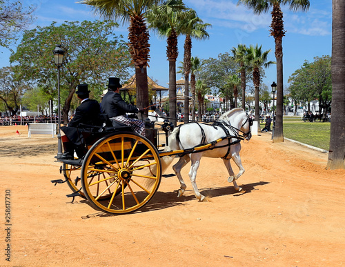 Driving competition dressage test , two-wheeled antique carriage