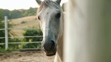 Beautiful Horse On A Summer Day