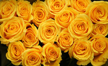 Flower Background Of Yellow Rose