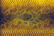 Snake Skin Background. Close Up Reptile Texture.