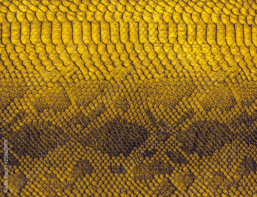 Snake skin background. Close up reptile texture. Wallpaper Mural