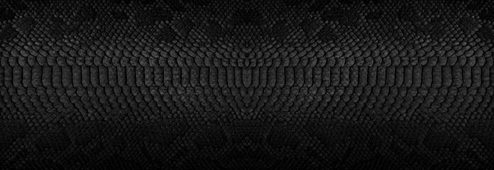 Pozadina zmijske kože. Panoramski web natpis s prostorom za kopiranje.