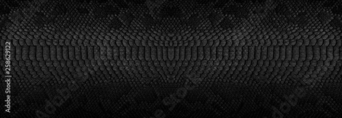 Snake skin background. Panoramic web banner with copy space. Fototapeta