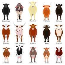 Cattle Chart With Breeds Name