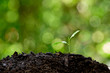 Little seedling germinate