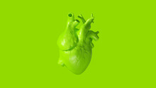 Lime Green Anatomical Heart 3d...