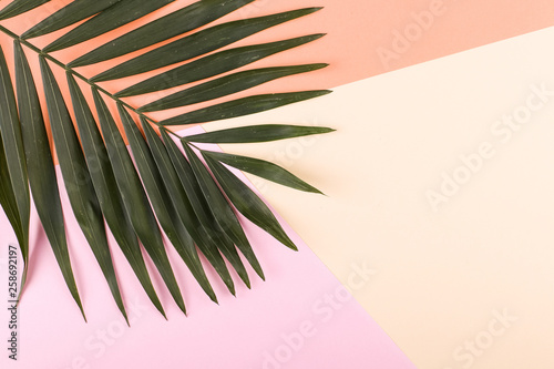 Palm leaves on colored paper. Summer mood, tropical background, blank.