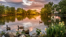 Sunset At Lake Loveland, Colorado With Swimming Ducks Public Park.