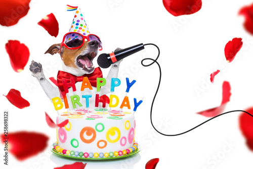 Spoed Foto op Canvas Crazy dog happy birthday dog