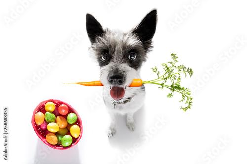 Spoed Foto op Canvas Crazy dog easter bunny dog