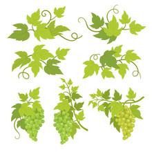 Grape Plant Decorative Elements. Grapevines Green Leaves. Vitis Vinifera Decor. Vector Flat Illustration Advertising. Isolated Transparent Background Template.