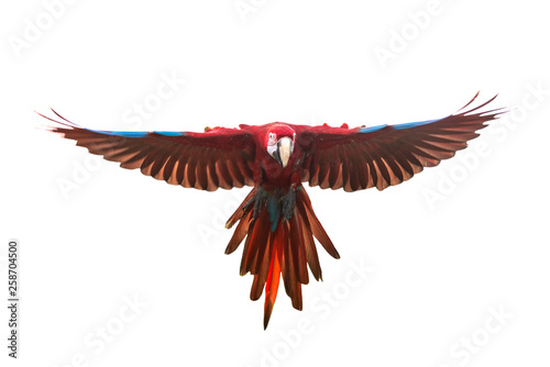 Photo Green winged macaw flying isolated on white background