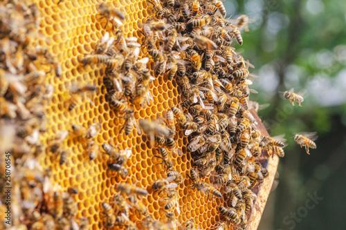 Slika na platnu Hardworking bees on honeycomb in apiary